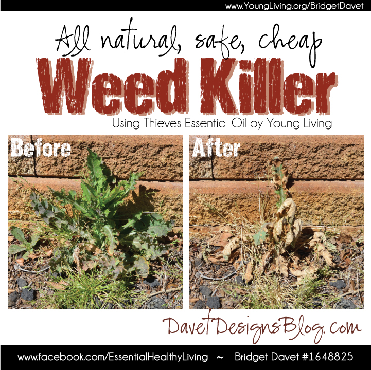 DIY All Natural Thieves Weed Killer